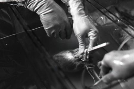 Prvá transplantácia srdca a smrť gitaristu Georgea Harrisona