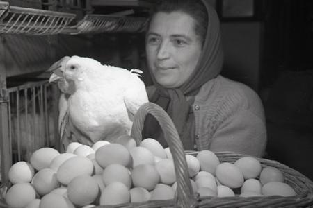 Rok 1960: Slepačie rekordérky z Bziniec pod Javorinou