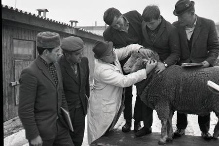 Rok 1968:V Záblatí pri Trenčíne vychovávajú ovčiarskych majstrov