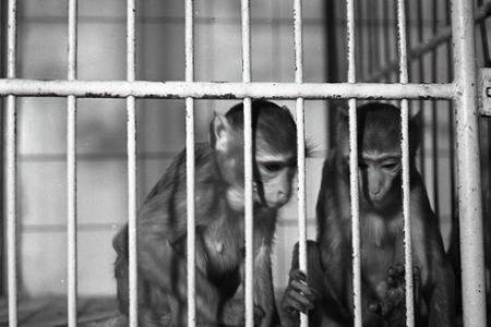 Rok 1954:Pokusmi na zvieratách sa v SAV vyvíjajú nové liečivá