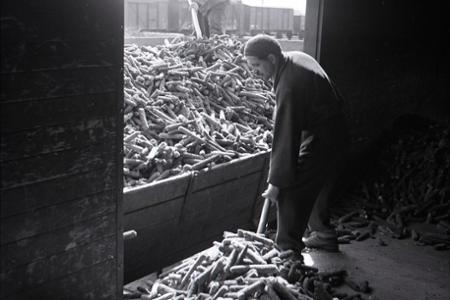 Rok 1953: Dosky z kukuričných šuľkov šetria drevo