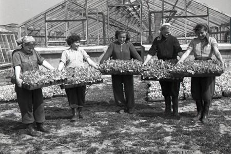 Rok 1955: Na trh sa dostáva prvá rýchlená slovenská zelenina