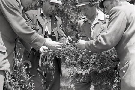 Rok 1960: Letecké postreky proti obaľovačovi jedľovému