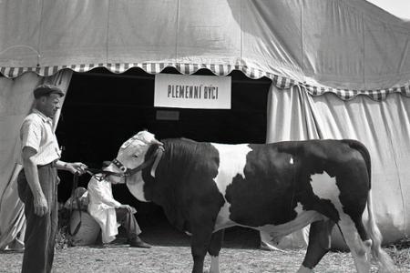 Rok 1958: V Nitre otvorili celoštátny výstavný a nákupný trh
