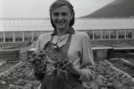 Rok 1957: Žilina bude mať moderné zeleninárstvo