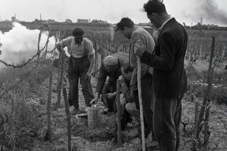 Rok 1956: Vynašli účinný prostriedok proti jarným mrazom