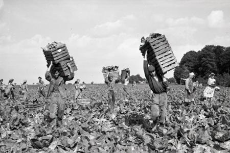 Rok 1957: Kapusta z Lehníc obohatí zeleninový trh aj v Prahe