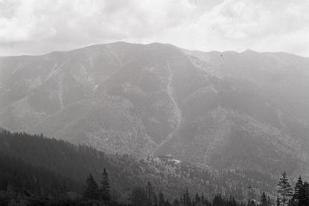 Rok 1965: Zalesňovanie Nízkych Tatier a Veľkej Fatry