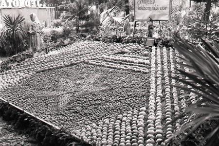 Rok 1952: Okresné dožinky v Košiciach