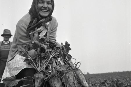 Rok 1960: Začína sa boj o cukor