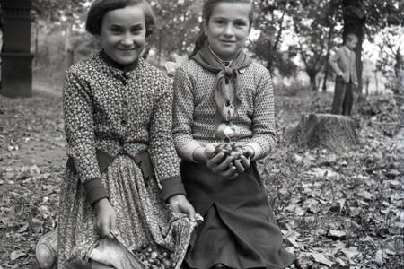 Rok 1956: Školské zbery gaštanov