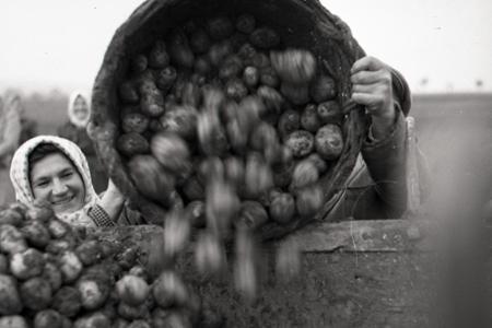 Rok 1950: Z polí sa zachraňuje posledná úroda