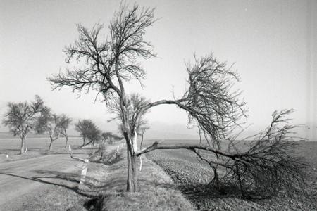 Rok 1964: Okresmi Nitra a Levice sa prehnala povíchrica