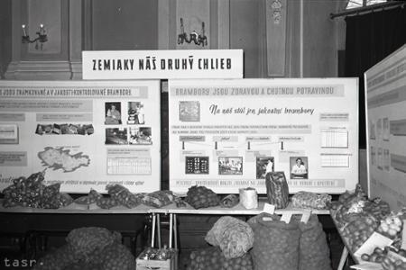 Rok 1957: V ČSR sa pestujú kvalitné zemiaky