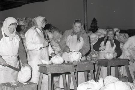 Rok 1965: Bude aj tento rok dosť kvasenej kapusty?
