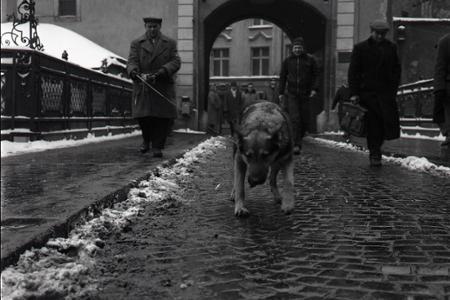 Rok 1966: Pes - pomocník slovenských plynárov