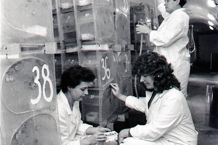 Rok 1961: Pomalý slimák prináša rýchlo peniaze
