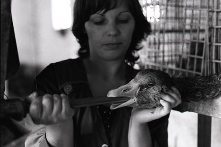 Rok 1983: V Slatinských Lazoch chovajú pečienkové husi