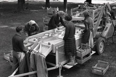 Rok 1957: Testujú nový triedič zemiakov