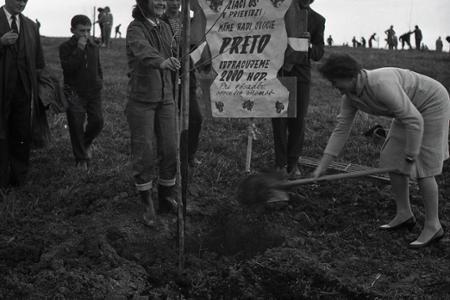Rok 1960: Nové ovocné stromy pre Hornú Nitru
