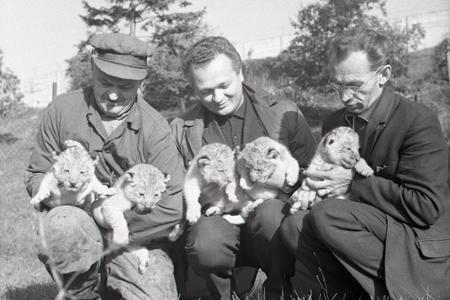 Rok 1969: V bojnickej ZOO sa narodili levie pätorčatá