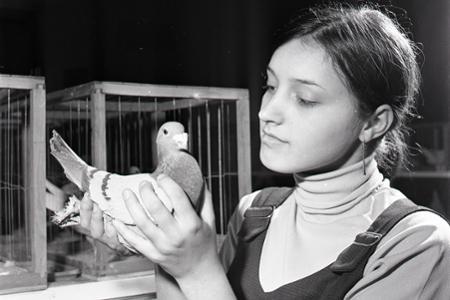 Rok 1969:Medzi obľúbené záľuby v ČSSR patrí chov poštových holubov