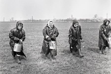 Rok 1972: Na východe republiky sa premnožili škrečky poľné