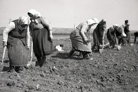 Rok 1951: Jarné práce na poliach Horných Zeleníc