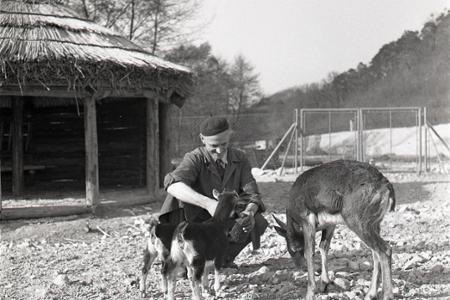 Rok 1960: Otvárajú sa brány bratislavskej ZOO