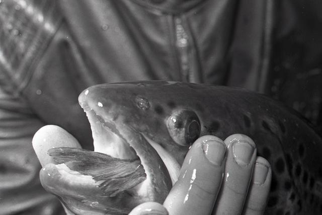 Chovné rybárstva majú plné ruky práce - fotografie - Vtedy