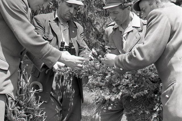 Rok 1960: Letecké postreky proti obaľovačovi jedľovému  - fotografie - Vtedy